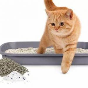 Lettiere per Gatti